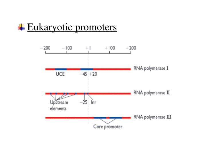 Eukaryotic promoters