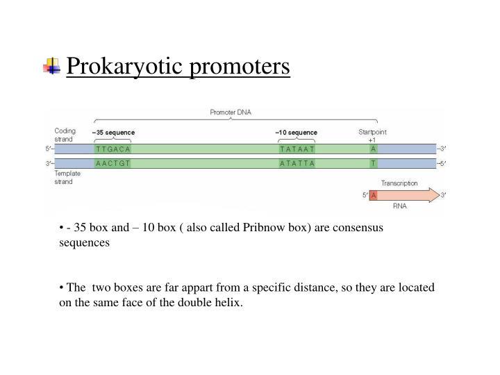 Prokaryotic promoters