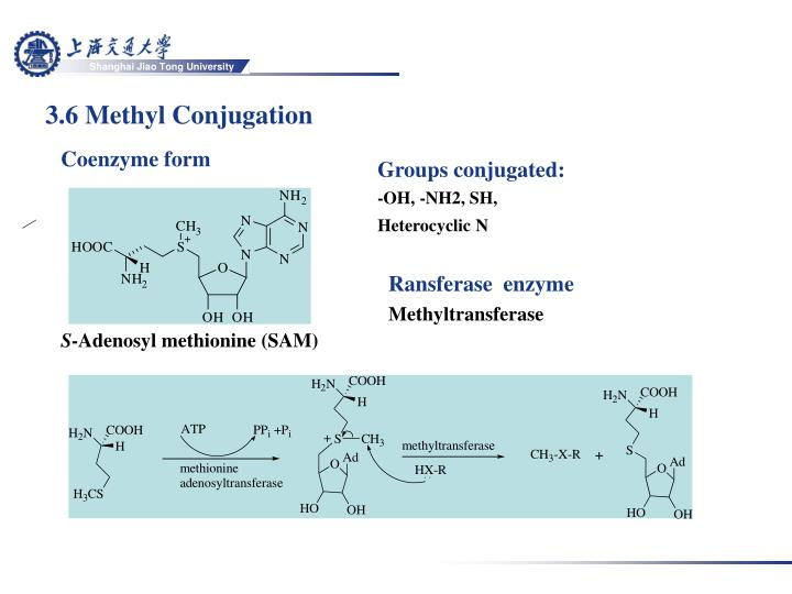 3.6 Methyl Conjugation