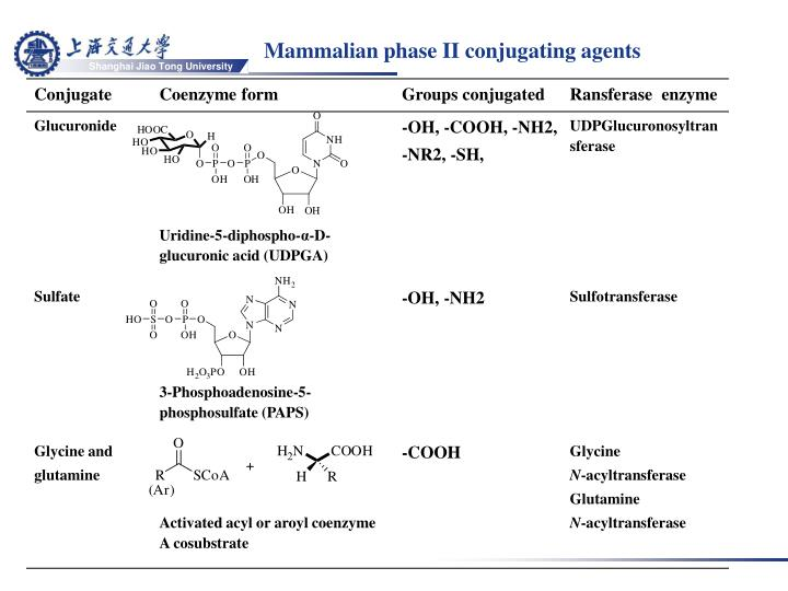 Mammalian phase II conjugating agents
