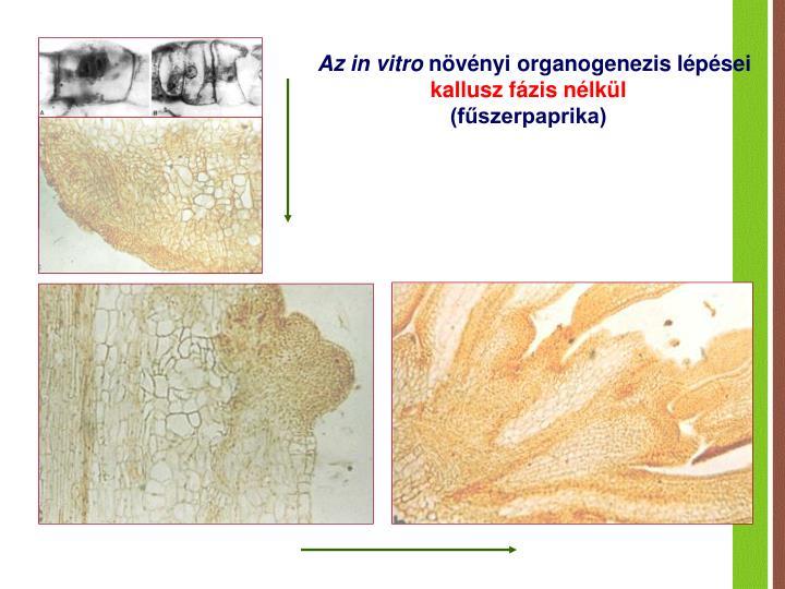 Az in vitro