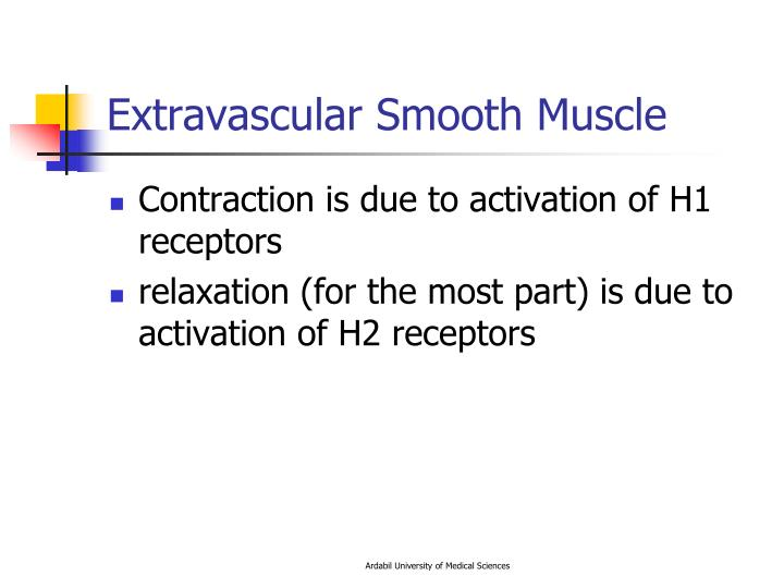 Extravascular Smooth Muscle
