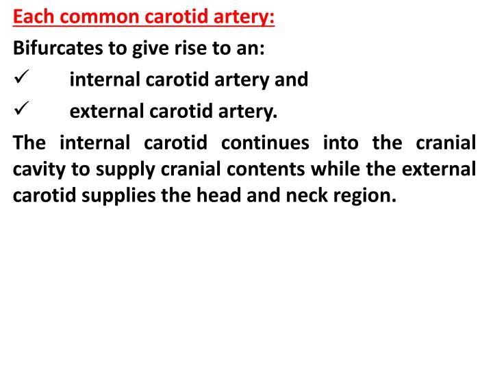 Each common carotid