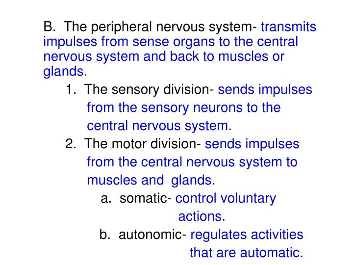 B.  The peripheral nervous system-