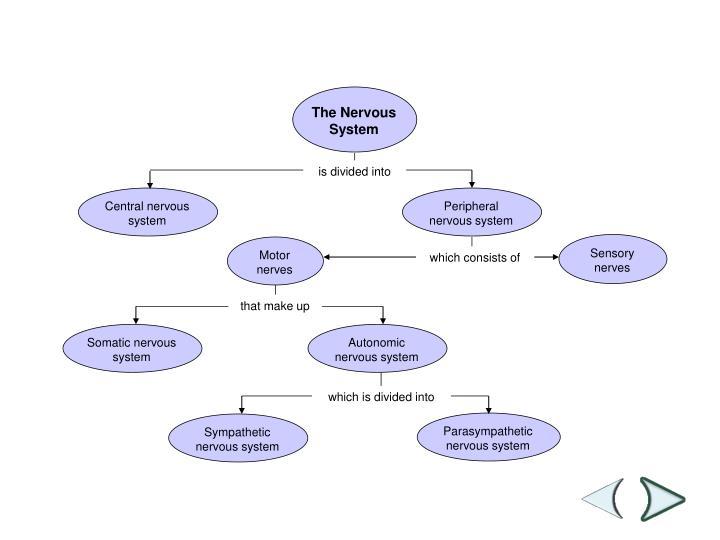 Central nervous system