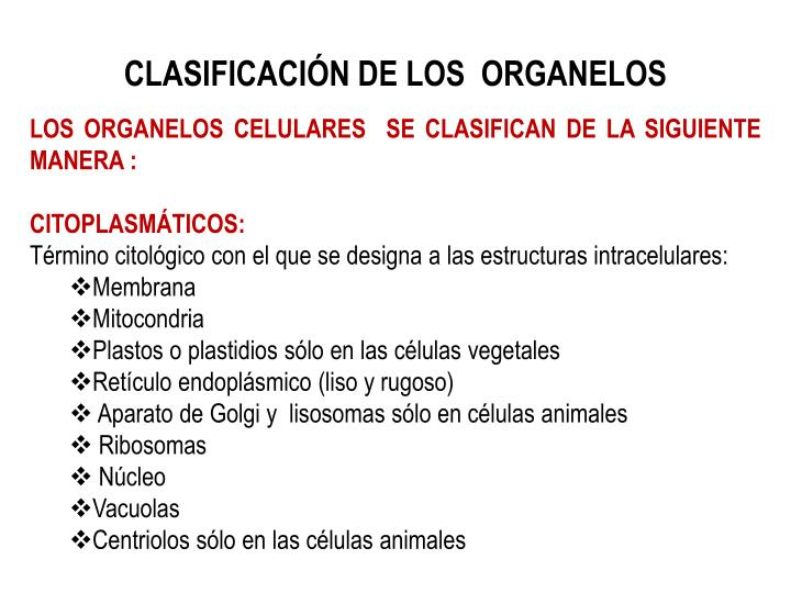 CLASIFICACIÓN DE LOS  ORGANELOS