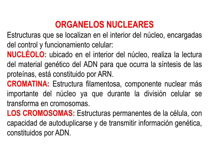 ORGANELOS NUCLEARES