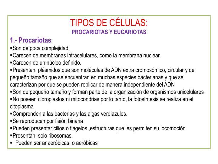 TIPOS DE CÉLULAS: