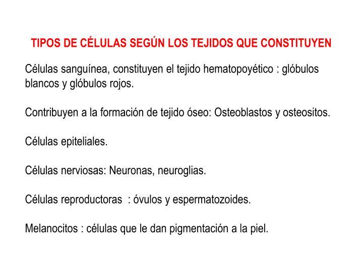 TIPOS DE CÉLULAS SEGÚN LOS TEJIDOS QUE CONSTITUYEN
