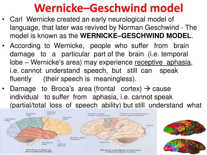 Wernicke–Geschwind model