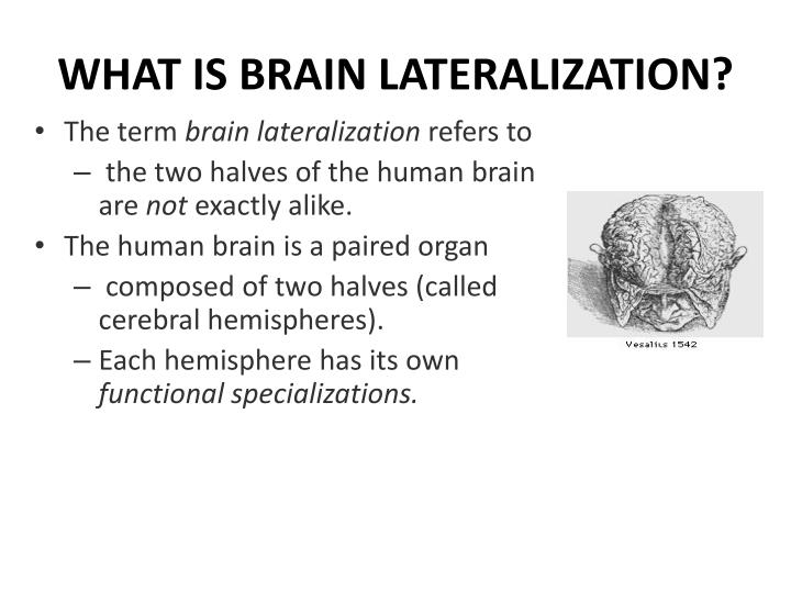 WHAT IS BRAIN LATERALIZATION?