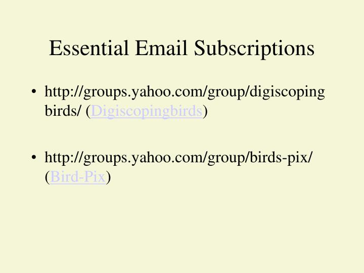 Essential Email Subscriptions