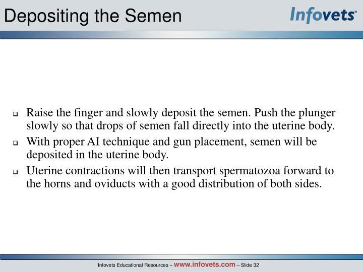 Depositing the Semen