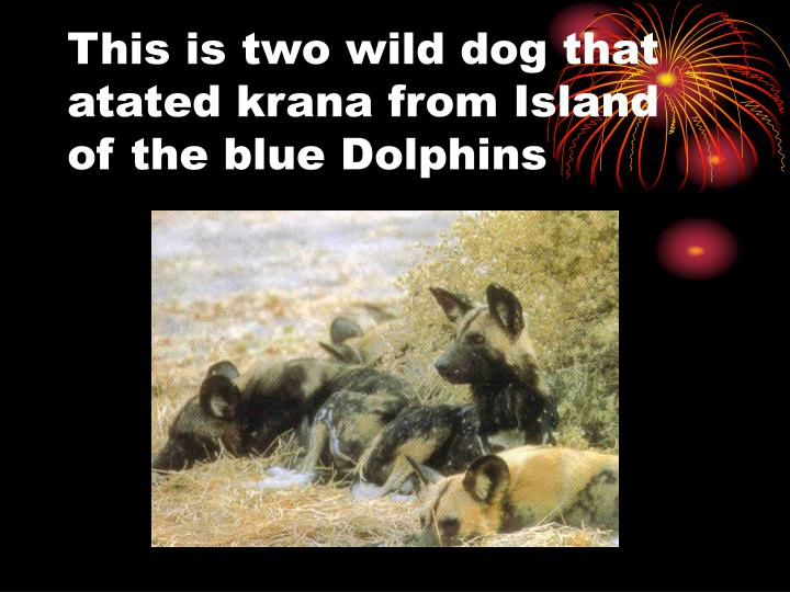 This is two wild dog that atated krana from Island of the blue Dolphins