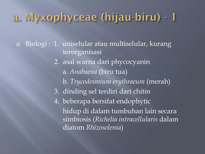 a. Myxophyceae (hijau-biru) - 1