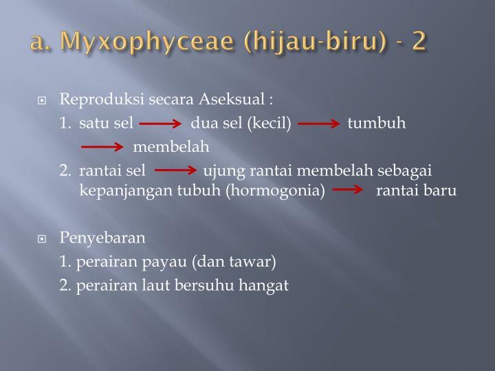 a. Myxophyceae (hijau-biru) - 2
