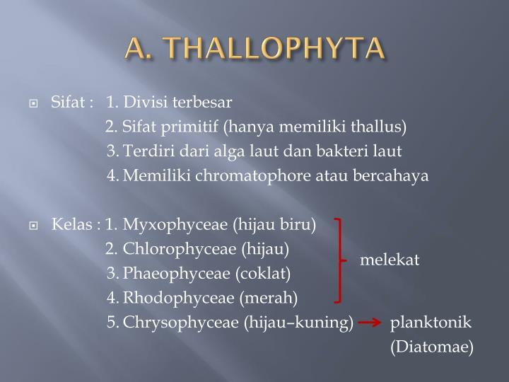 A. THALLOPHYTA