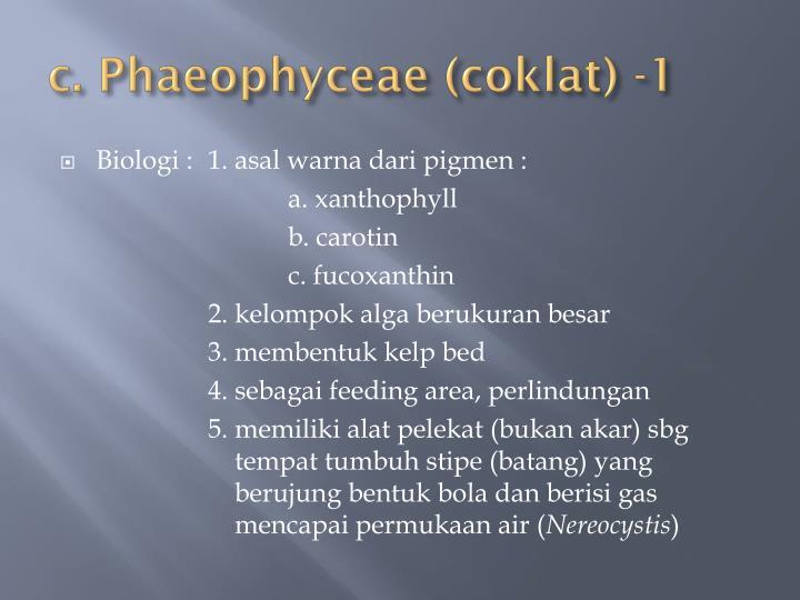c. Phaeophyceae (coklat) -1