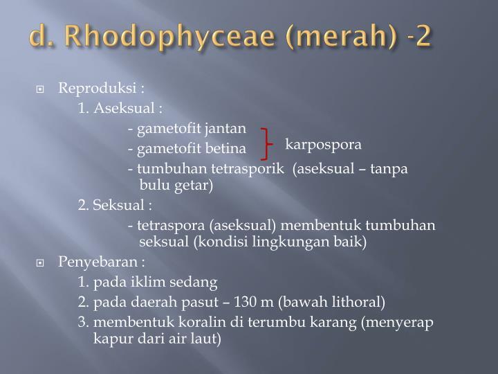 d. Rhodophyceae (merah) -2