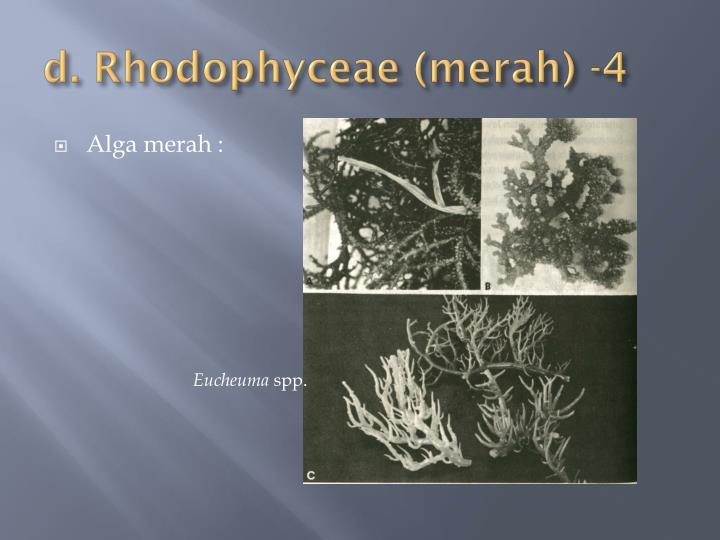 d. Rhodophyceae (merah) -4