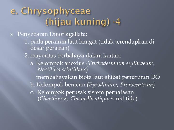 e. Chrysophyceae
