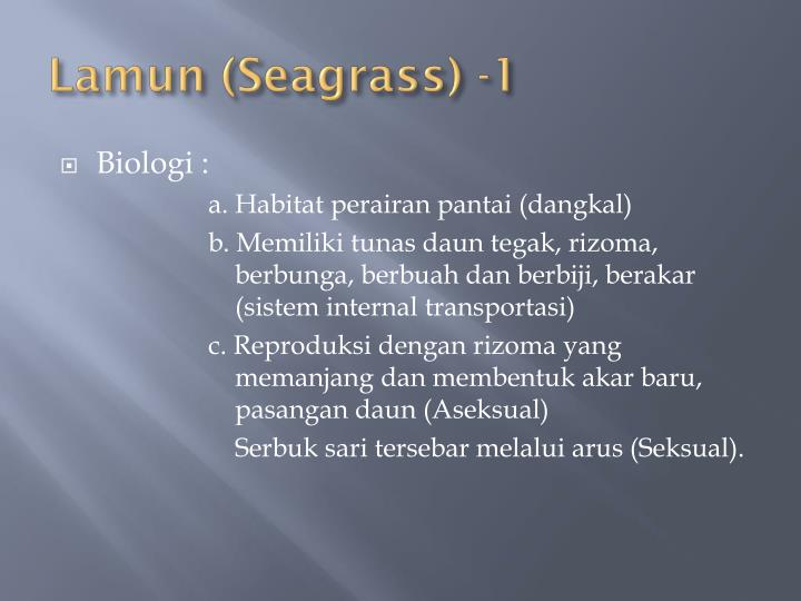 Lamun (Seagrass) -1