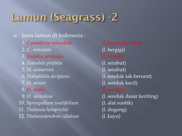 Lamun (Seagrass) -2