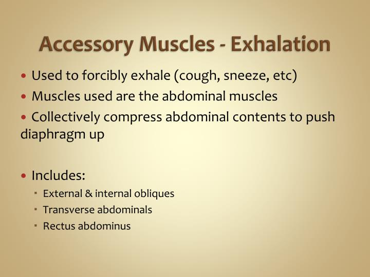 Accessory Muscles - Exhalation