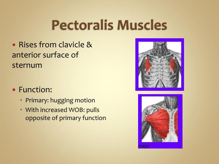 Pectoralis Muscles