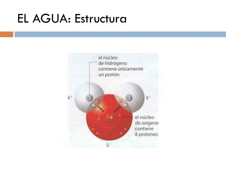 EL AGUA: Estructura