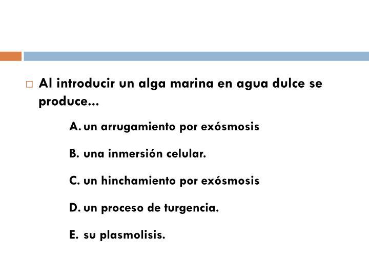 Al introducir un alga marina en agua dulce se produce...