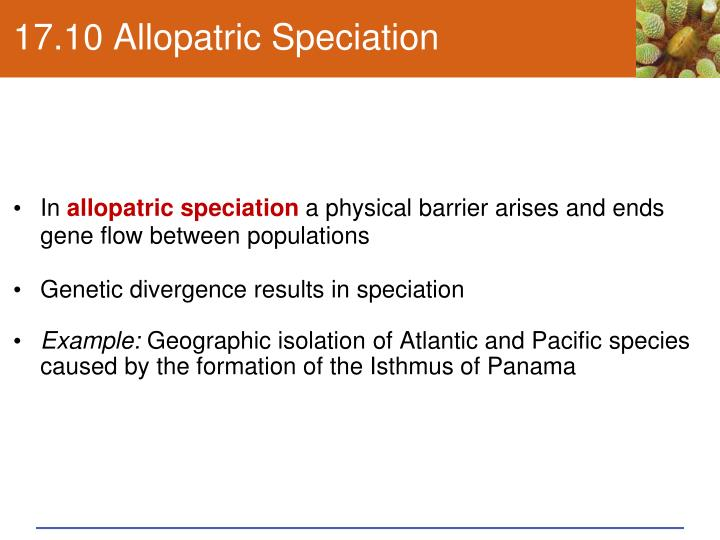 17.10 Allopatric Speciation