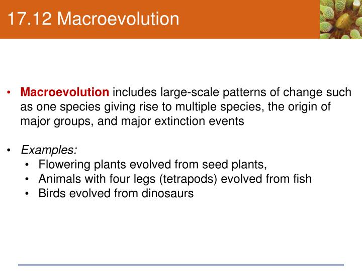 17.12 Macroevolution