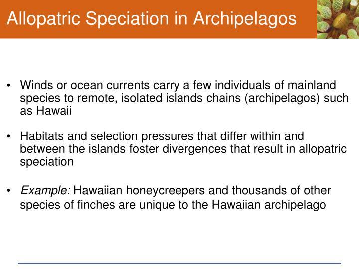 Allopatric Speciation in