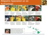allopatric speciation on an archipelago