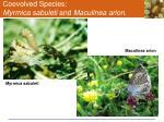 coevolved species myrmica sabuleti and maculinea arion1