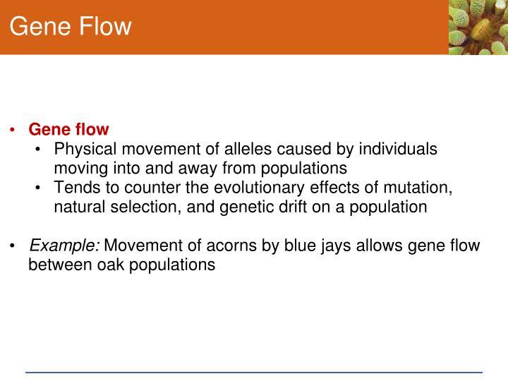 Gene Flow