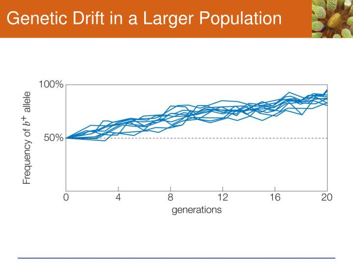 Genetic Drift in a Larger Population