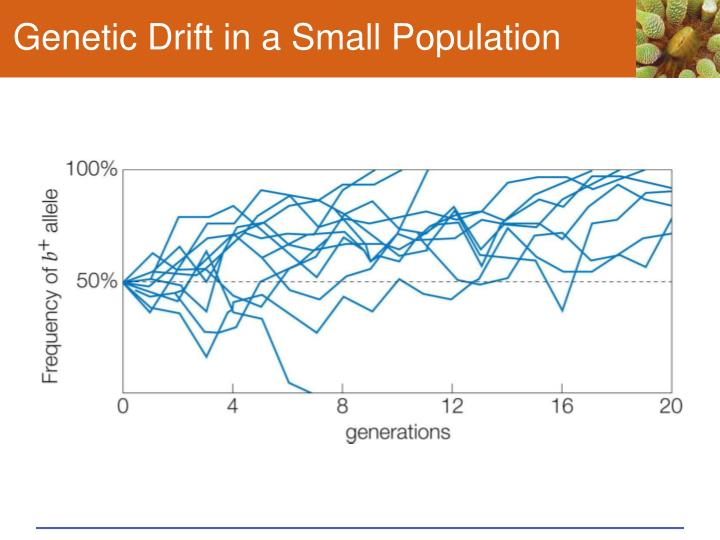 Genetic Drift in a Small Population