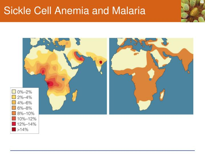 Sickle Cell Anemia and Malaria