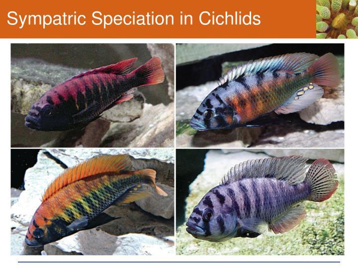 Sympatric Speciation in Cichlids