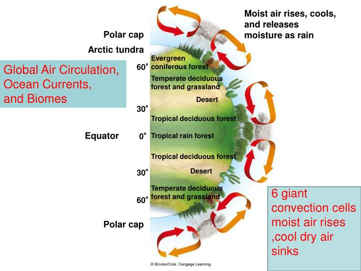 Moist air rises, cools, and releases moisture as rain