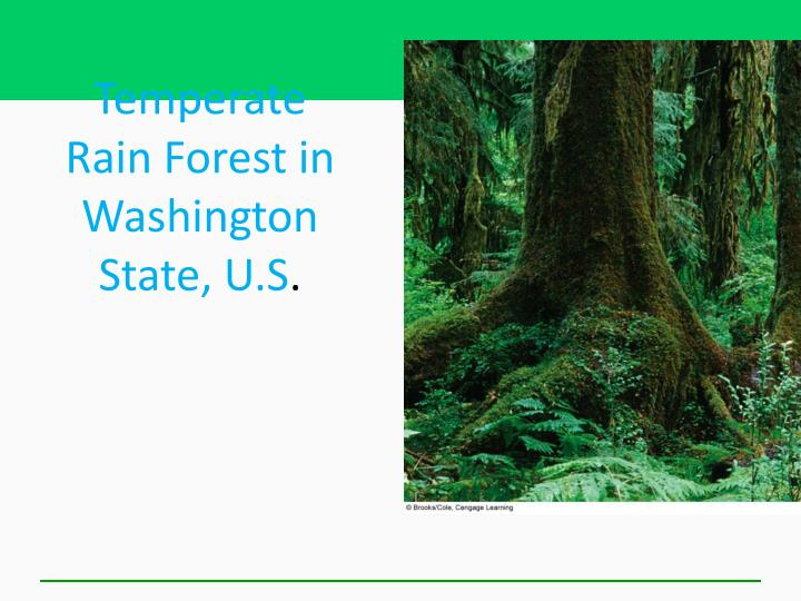Temperate Rain Forest in Washington State, U.S