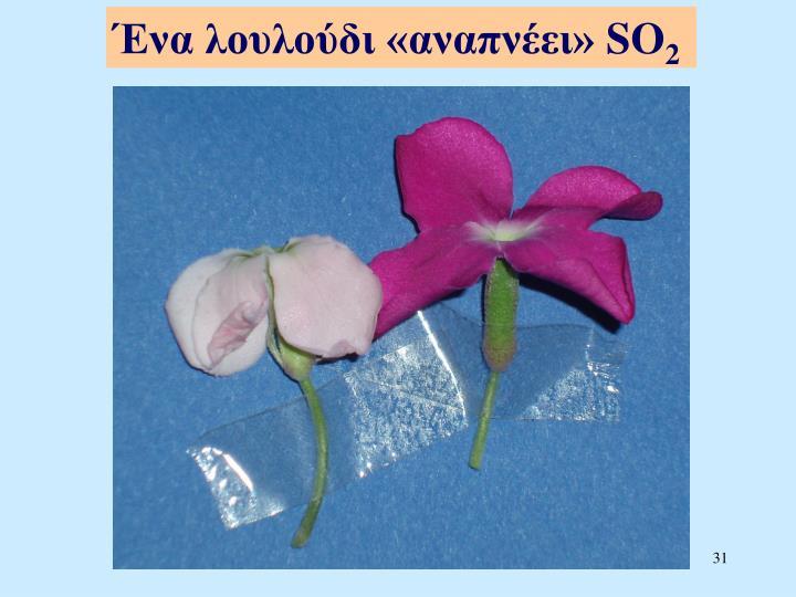 Ένα λουλούδι «αναπνέει»