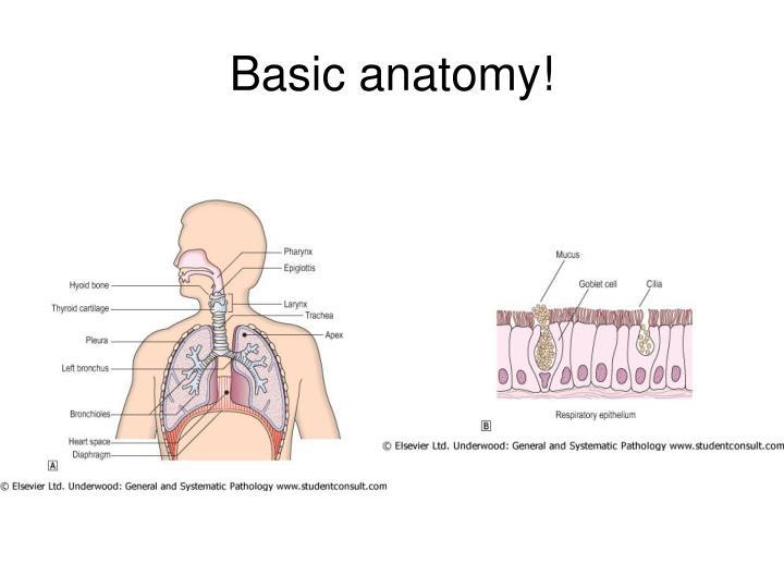 Basic anatomy!