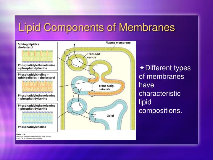 Lipid Components of Membranes