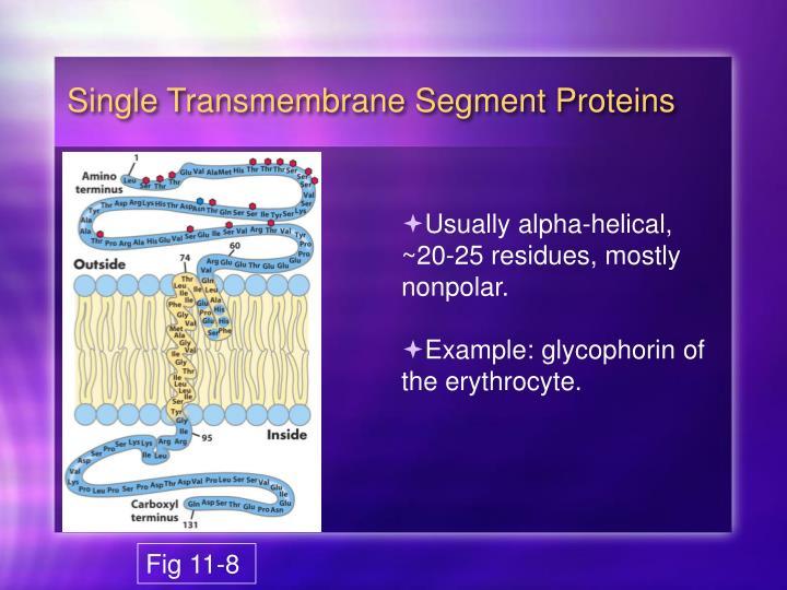 Single Transmembrane Segment Proteins
