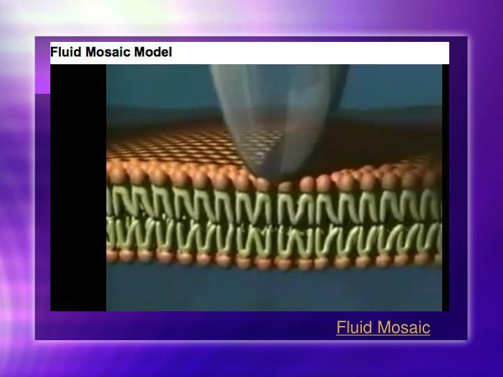 Fluid Mosaic