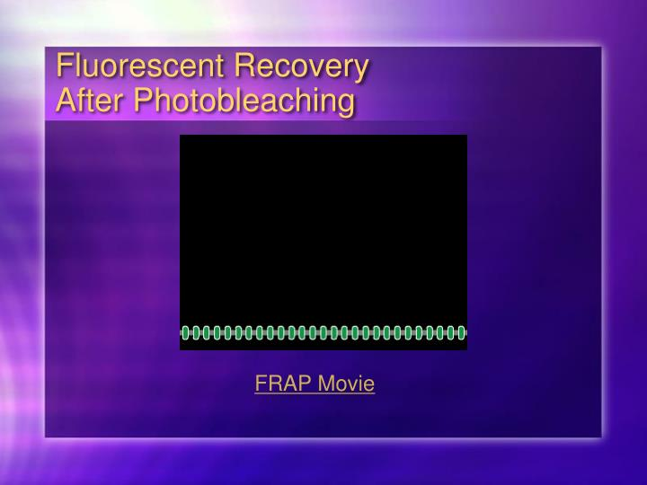 Fluorescent Recovery After Photobleaching