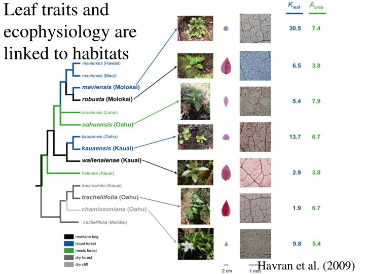 Leaf traits and ecophysiology are linked to habitats